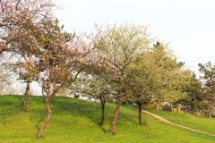 Árboles florecientes Imagen de archivo libre de regalías