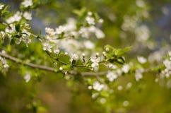 Árboles florecientes foto de archivo libre de regalías