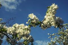 Árboles florecientes Fotos de archivo