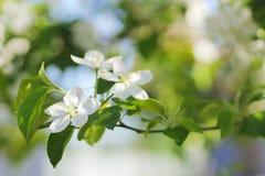 Árboles florecientes con gran detalle Foto de archivo