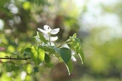 Árboles florecientes con gran detalle Imagenes de archivo