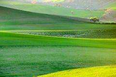 Árboles florecientes de la primavera blanca en un fondo de una colina verde fotos de archivo libres de regalías