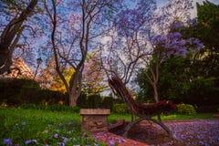 Árboles florecientes del Jacaranda en el parque Vivieros sobre las pre-horas Valencia, España Fotografía de archivo