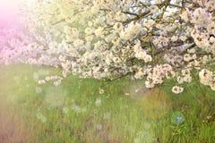 Árboles florecientes en la primavera en el parque y la luz del sol Naturaleza hermosa Espacio libre para el texto Copie el espaci fotografía de archivo