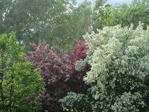 Árboles florecientes en primavera fotografía de archivo