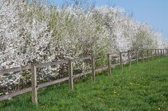 Árboles florecientes a lo largo del prado Imágenes de archivo libres de regalías