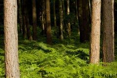 Árboles forestales Imágenes de archivo libres de regalías