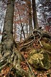 Árboles forestales Imagen de archivo