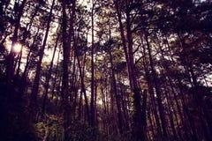 Árboles forestales Fotos de archivo libres de regalías
