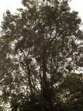 Árboles forestales Fotografía de archivo