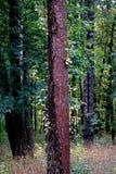 Árboles forestales Fotos de archivo
