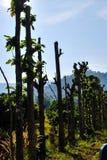 Árboles forestales Imagen de archivo libre de regalías
