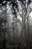 Árboles forestales brumosos Imagenes de archivo