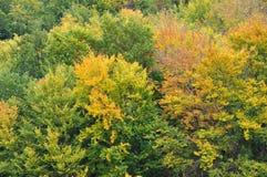 Árboles forestales coloridos del otoño Fotografía de archivo libre de regalías