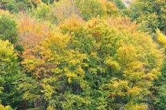 Árboles forestales coloridos del otoño Foto de archivo libre de regalías