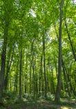 Árboles forestales con luz del sol Paisaje del VERANO fotografía de archivo libre de regalías