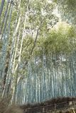 Árboles forestales de bambú en Arashiyama, Japón foto de archivo