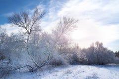 Árboles forestales del invierno en nieve Fotografía de archivo libre de regalías