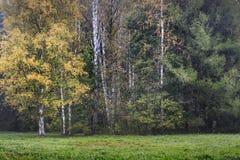 Árboles forestales del otoño Imagen de archivo libre de regalías