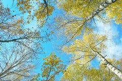 Árboles forestales del otoño Foto de archivo libre de regalías