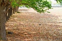 Árboles forestales del otoño. madera verde de la naturaleza Fotos de archivo libres de regalías