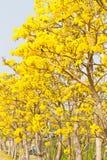 Árboles forestales del otoño. madera verde de la naturaleza Fotografía de archivo libre de regalías