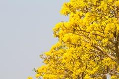 Árboles forestales del otoño. madera verde de la naturaleza Imagenes de archivo