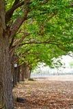 Árboles forestales del otoño. madera verde de la naturaleza Foto de archivo libre de regalías