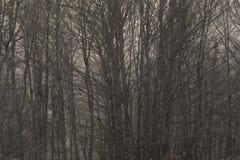 Árboles forestales densos inactivos Fotos de archivo libres de regalías