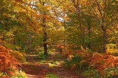 Árboles forestales en colores del otoño Fotografía de archivo