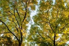 Árboles forestales en fondo del otoño Imágenes de archivo libres de regalías