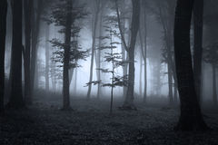 Árboles forestales en luz contraria durante una niebla imagenes de archivo