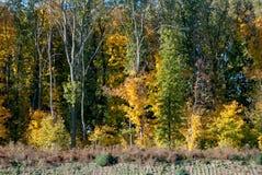 Árboles forestales en otoño imagen de archivo