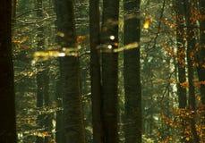 Árboles forestales en otoño fotos de archivo
