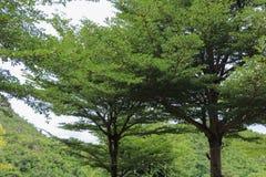Árboles forestales madera verde de la naturaleza foto de archivo