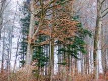 Árboles forestales negros imagen de archivo