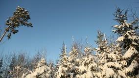 Árboles forestales nevosos mágicos en nieve enorme Humor de la Navidad de la Navidad Imágenes de archivo libres de regalías