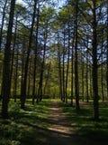 árboles forestales soleados en Rusia Tula Foto de archivo