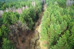 Árboles forestales verdes Foto de archivo