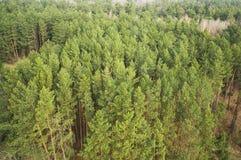Árboles forestales verdes Foto de archivo libre de regalías