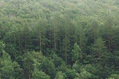 Árboles forestales verdes en fondo de la textura de la niebla Paisaje de la naturaleza Imagen de archivo libre de regalías