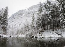 Árboles forestales y charca Nevado en las altas montañas francesas Fotos de archivo libres de regalías