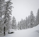 Árboles forestales y charca Nevado en las altas montañas francesas Foto de archivo