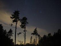 Árboles forestales y estrellas de la noche Imagen de archivo libre de regalías