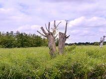 Árboles formados impares con el pájaro Imagen de archivo