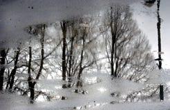 Árboles Foto abstracta Fotos de archivo libres de regalías