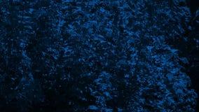 Árboles frondosos en brisa en la noche