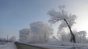 árboles Frost-cubiertos por el camino en un pueblo ruso almacen de metraje de vídeo