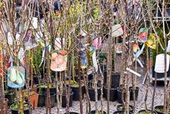 Árboles frutales Imagen de archivo libre de regalías