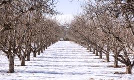 Árboles frutales en Fruitland, Idaho Foto de archivo